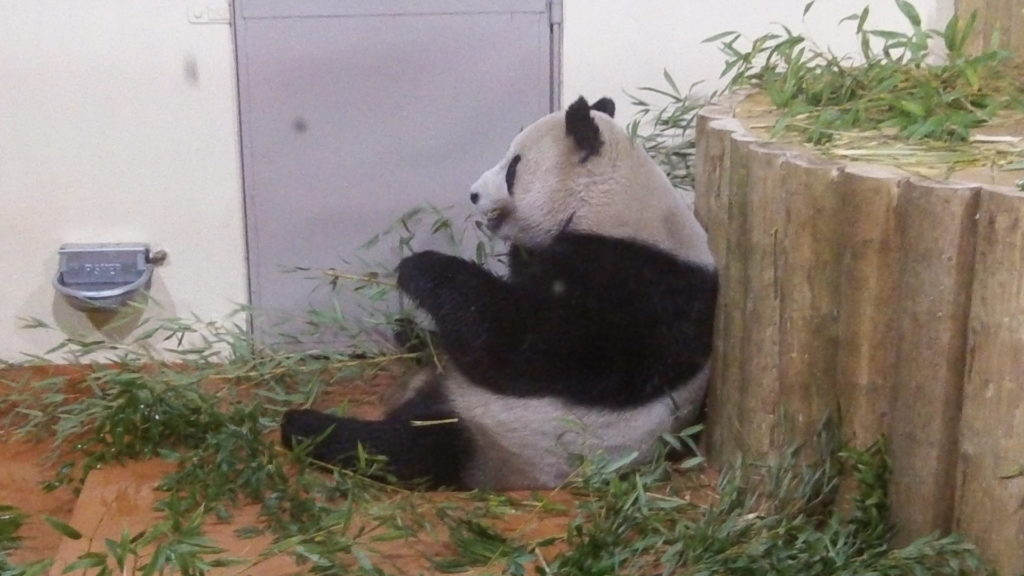 panda UK