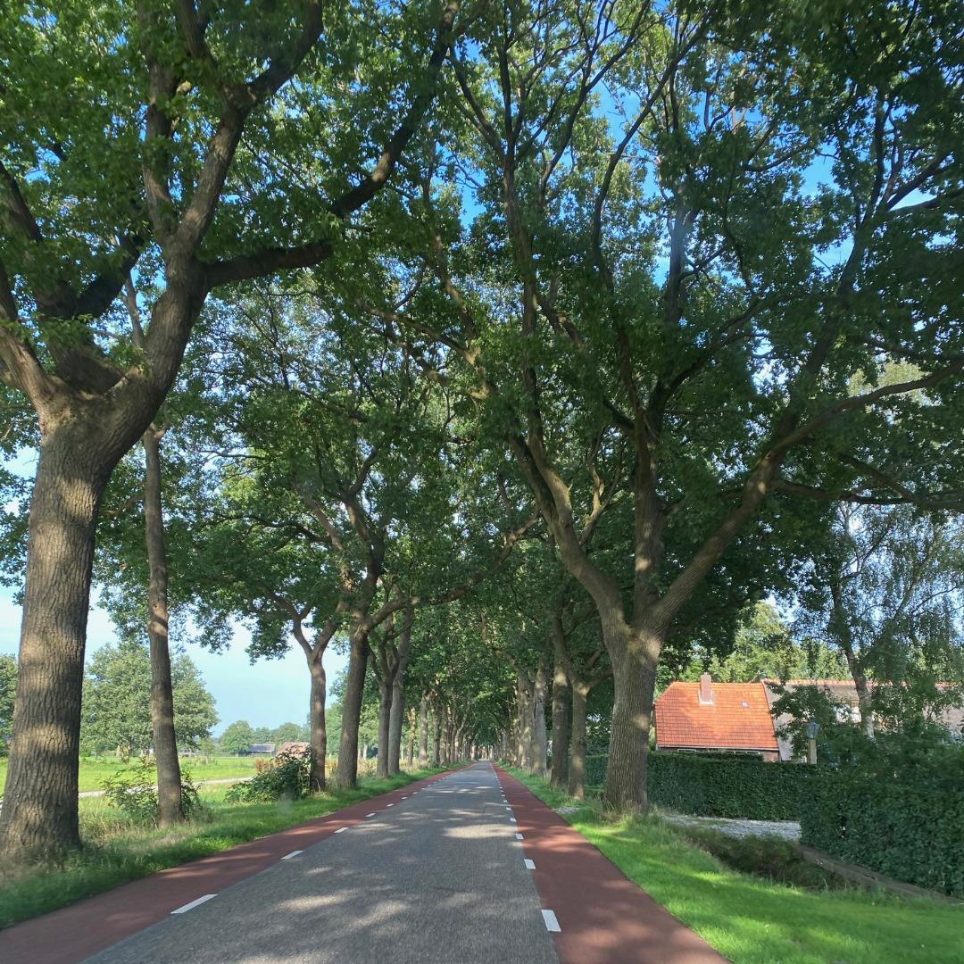 Allee und Straße mit Fahrradweg